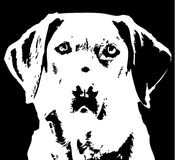 Labrador retriever. Black and white vector image of labrador retriever Royalty Free Stock Image