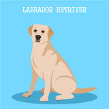 Labrador retriever. On a blue background. Vector Royalty Free Stock Photography
