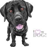 Labrador retriever divertido de la raza del perro negro de la historieta del vector Imagen de archivo