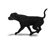 Labrador Retriever Dog. 3D rendering with clipping path and shadow over white Stock Photography
