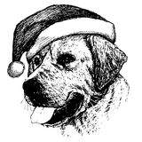 Labrador Retriever dog with christmas santa hat Royalty Free Stock Image