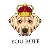 Labrador retriever dog in crown. Vector illustration. Labrador retriever dog in crown. You rule lettering. Vector illustration isolated on white background Royalty Free Stock Photography