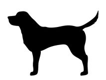 Labrador retriever dog. Vector black silhouette. Vector black silhouette of a labrador retriever dog isolated on a white background Stock Photo