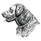 Labrador retriever head. Vector hand drawing illustration Royalty Free Stock Images