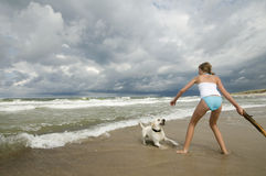 Labrador retriever playing on the beach. Stock Photo