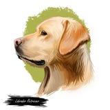 Labrador retriever-Porträt der reinrassigen digitalen Kunstillustration Kanadischer Säugetiergewehrhund, die Zucht jagend herein  lizenzfreie abbildung