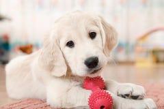 Free Labrador Retriever Puppy Stock Photo - 47691570