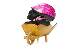 Labrador Retriever puppy with a helmet Royalty Free Stock Image
