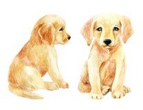 Labrador retriever puppy set Stock Photos