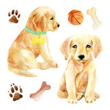 Labrador retriever puppy set. Two puppies with toys. Hand painted dogs watercolor illustration, isolated on white backgroun Stock Photography