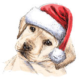Labrador Retriever. With santa claus hat hand drawn vector , use for christmas background Royalty Free Stock Photos