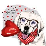 Labrador retriever tiré par la main avec le baloon de forme de coeur Carte de voeux de Saint Valentin de vecteur Le chien coloré  illustration stock