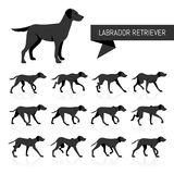 Labrador Retriever vector silhouettes. Full collection of digital drawings of a Labrador retriever standing and walking Royalty Free Stock Image