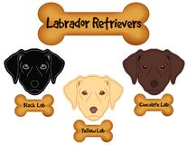 Labrador Retrievers,  Black, Chocolate, Yellow Labs, Dog Bone Treats Royalty Free Stock Photos