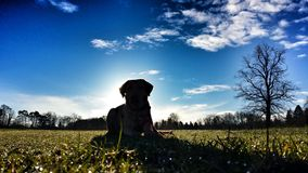 Labrador-Schattenbild Lizenzfreie Stockfotos