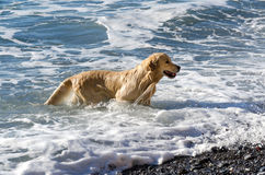 Labrador sea Royalty Free Stock Image