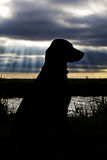 Labrador silhouetté Photos stock