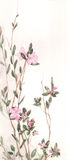 Labrador tea blossoms watercolor painting