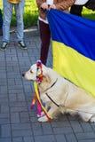 Labrador in traditionele Oekraïense bloemkroon Royalty-vrije Stock Fotografie