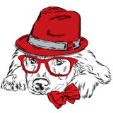 Labrador vector . Pedigree dog. Cute puppy. Labrador wearing a hat , sunglasses and a tie . Royalty Free Stock Images