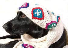 labrador wearing a vintage hat Stock Photography