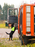 Labrador at work Stock Images