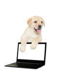 Labradora szczeniak i komputer Fotografia Royalty Free