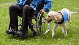 Labradorhandbokhund och hans rörelsehindrade ägare royaltyfri foto