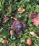 Labradorite pendant in a shape of a leaf. Handmade pendant in a shape of a leaf amongst acorns Royalty Free Stock Images