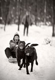Labradors Pulling Girl on Sledge Royalty Free Stock Photo