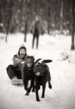 Labradors que tira de la muchacha en el trineo Foto de archivo libre de regalías