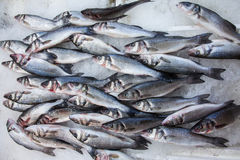 Labrax or seabass on a fish market Royalty Free Stock Photography