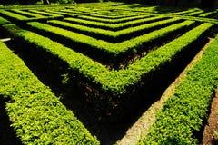 Labyrint i den underbara Giusti trädgården royaltyfri fotografi