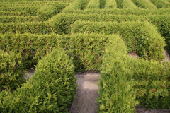 Labyrinth. A labyrinth with green hedges Royalty Free Stock Images