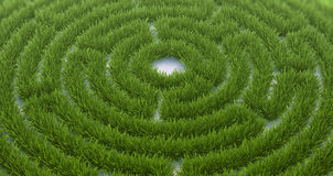 Labyrinth grass Royalty Free Stock Photography