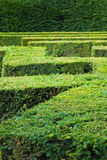 Labyrinth of Green Bushes Stock Photos