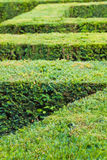 Labyrinth of Green Bushes Royalty Free Stock Photography
