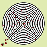 Labyrinth with ladybugs Royalty Free Stock Photo