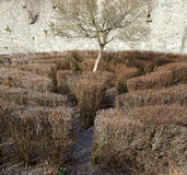 Labyrinth with leafless bushes and a tree. In the Center at winter, Freistadt, Austria Royalty Free Stock Photography