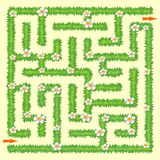 Labyrinth. Maze game for kids. Green grass and chamomiles Royalty Free Stock Images