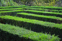 Labyrinth Maze of Tall Bushes. Stock Image