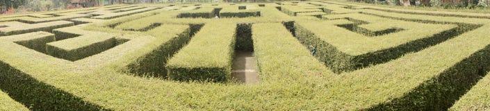 Labyrinth,maze , garden, green, nature stock photography