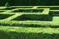 Labyrinth shaped bush grass Royalty Free Stock Photo