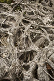 Labyrinth of tangled driftwood on the shoreline of Flagstaff Lak Royalty Free Stock Photo