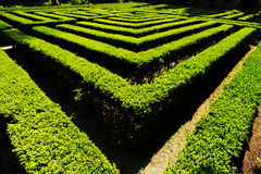 Labyrinth in the wonderful Giusti garden Royalty Free Stock Photography
