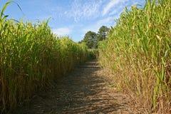 Labyrinthe dans un domaine de maïs Photographie stock libre de droits