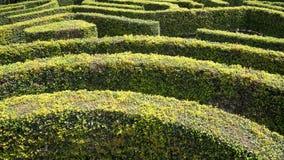 Labyrinthe de haie Images libres de droits