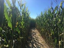 Labyrinthe de maïs image stock