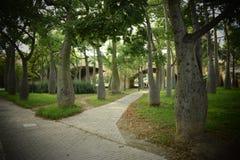 Labyrinthe des arbres Photo stock