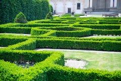 Labyrinthe des plantes vertes dans le jardin de Prague, République Tchèque Photo libre de droits